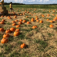 Pumpkin Patch in Orlando