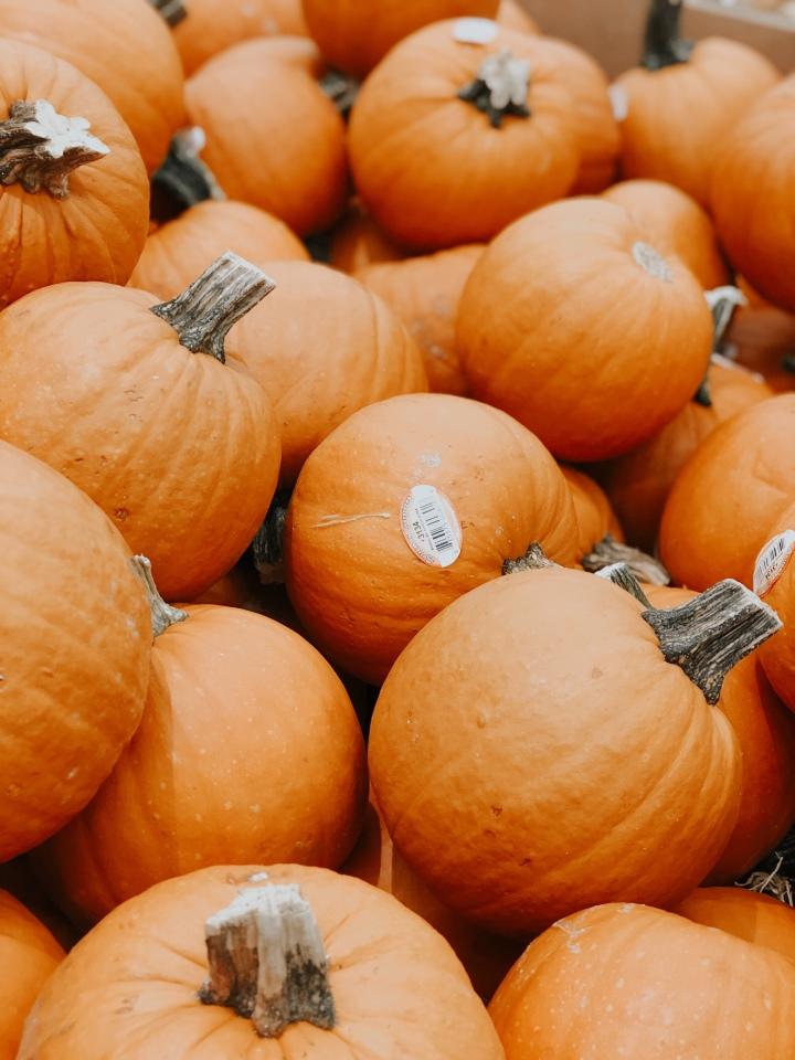 3 Pumpkin Patch que no puedes dejar de visitarOrlando
